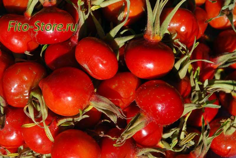 Собранные ягоды шиповника