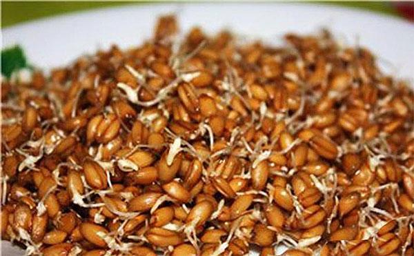 Пророщенная пшеница против тромбоза