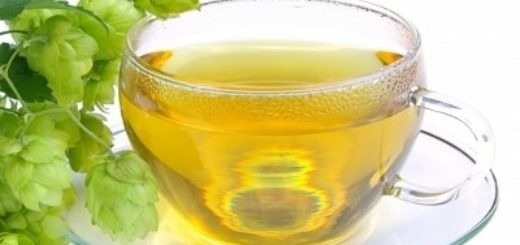 Чай из шишек хмеля - полезные свойства и рецепты