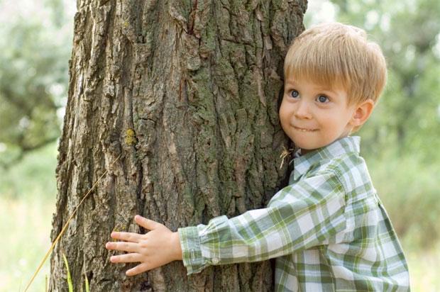Как зарядиться энергией от дерева