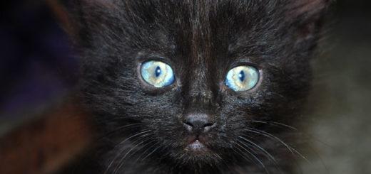 Кошачьи паразиты - токсоплазма