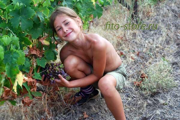 Счастливый ребенок с виноградом